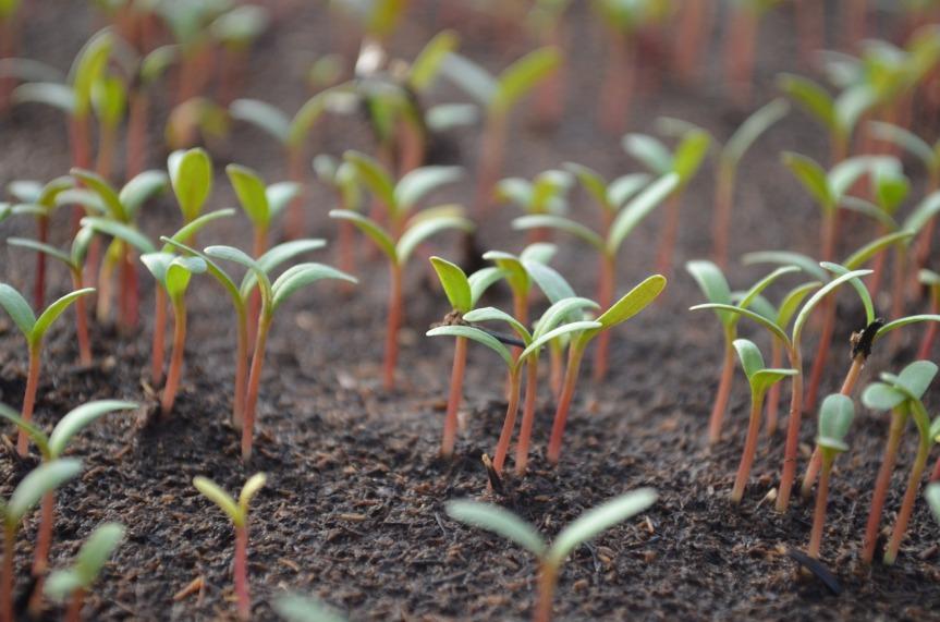 Comment faire des semis en intérieur?